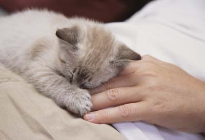 Home-Remedies-For-Treating-A-Sick-Cat