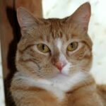 Cat Sneezing: Maybe an illness?